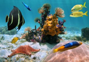 Fische Curaçao