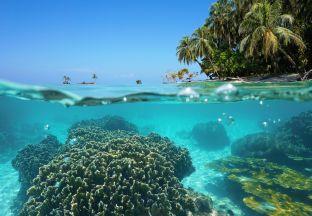 Unterwasserwelt Costa Rica